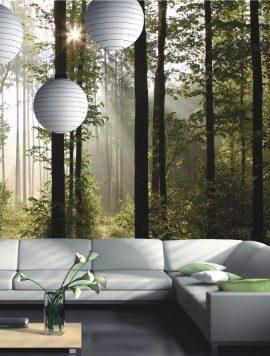 Fototapete-Tapete-Natur-Wald-Bume-Lichtspiel-Foto-360-cm-x-254-cm-0