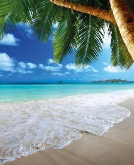 Sandstrand-mit-Palmen-und-Meer-Fototapete-Paradies-Strand-unter-Palmen-Wandbild-XXL-Beach-Wanddeko-0
