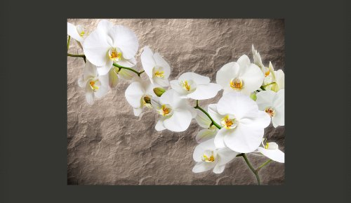 Vlies-Fototapete-300x231-cm-Top-Tapete-Wandbilder-XXL-Blumen-10040906-60-0-0